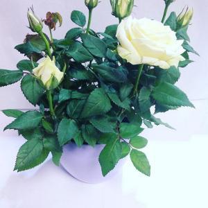plantes fleuriste bezons